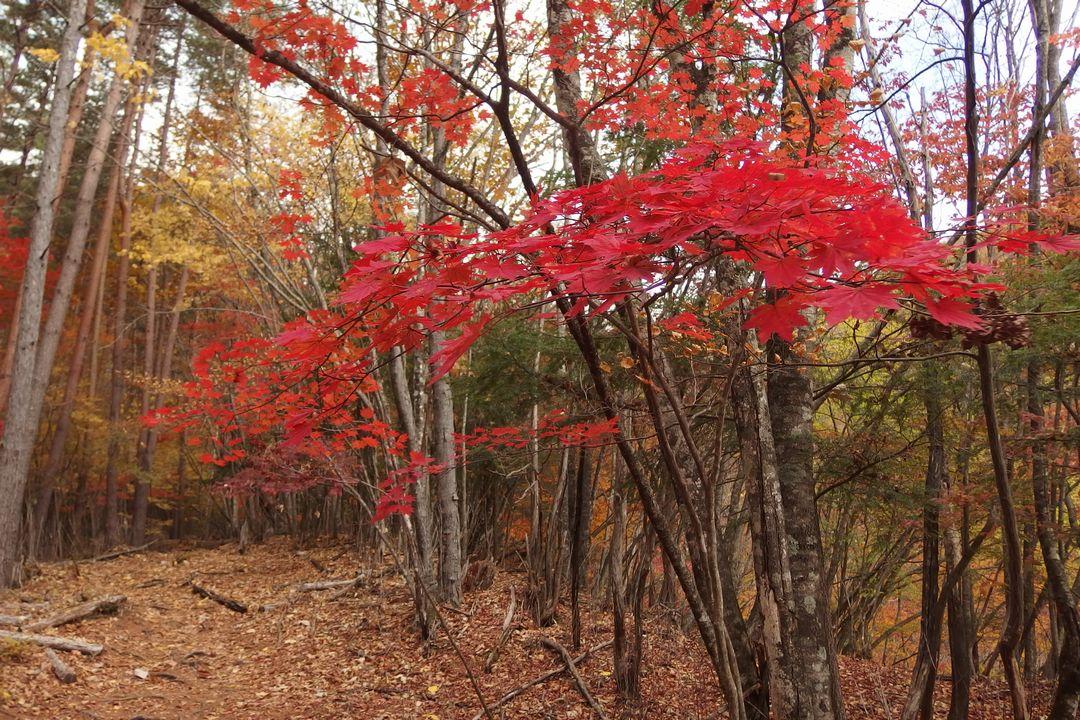 紅葉の徳ちゃん新道