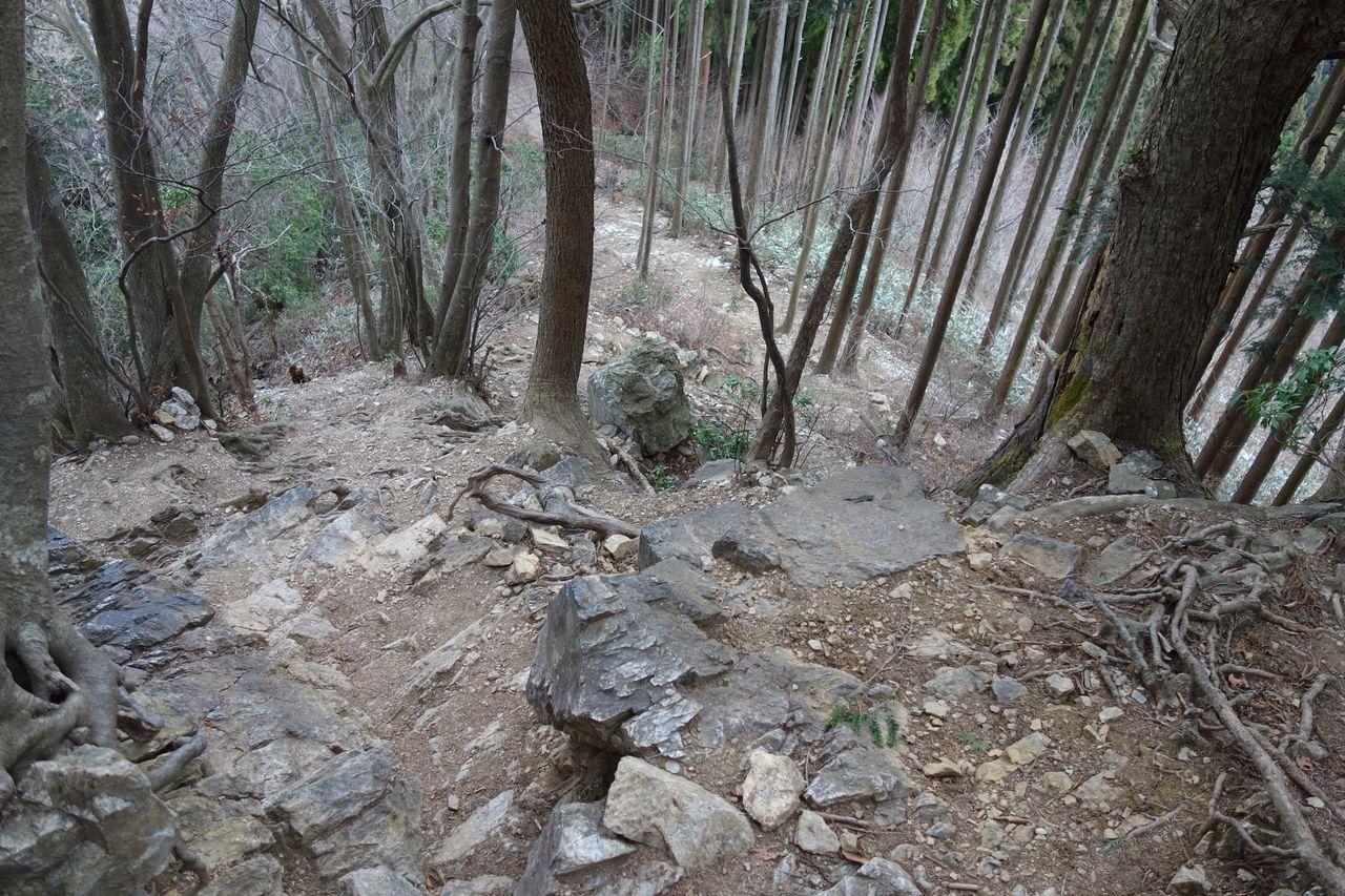170114棒ノ折山_017