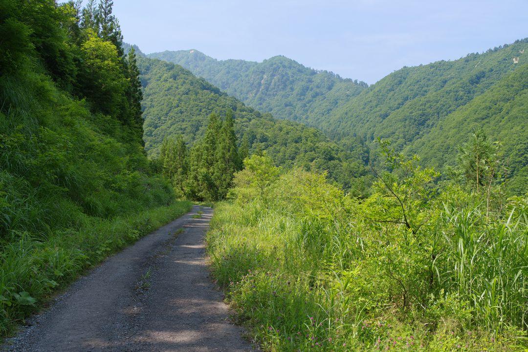 大源太山の登山口手前の林道