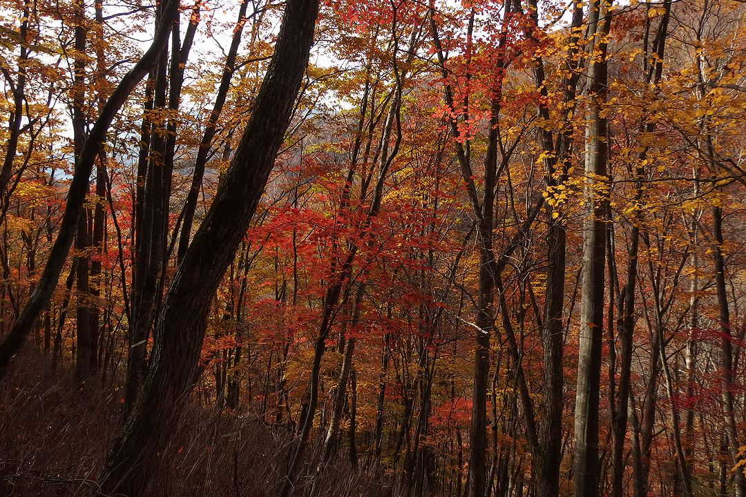 紅葉の雁坂峠登山道