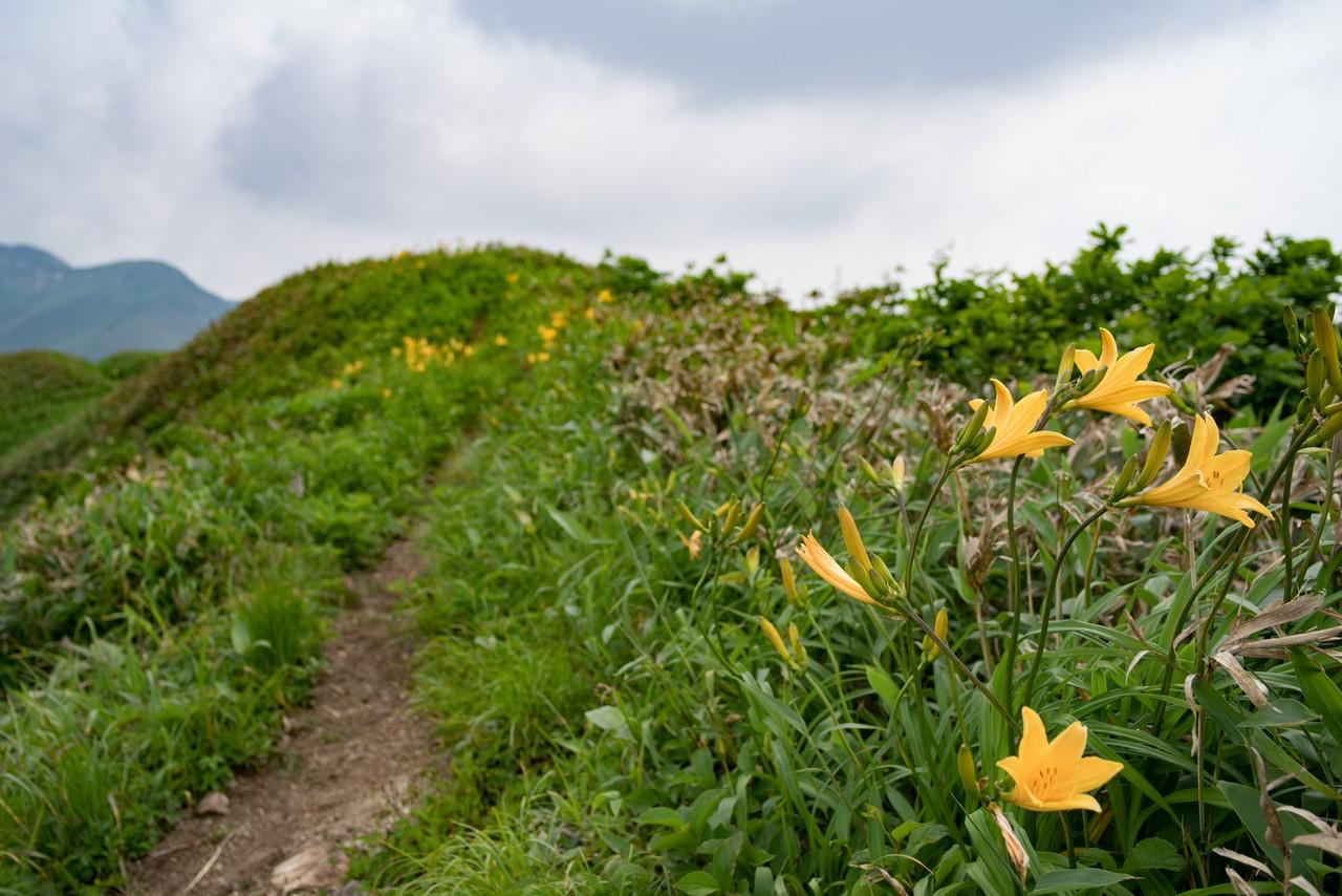 七ツ小屋山 ニッコウキスゲの咲く稜線