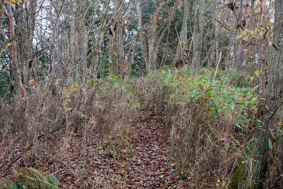 熊笹の茂る笹尾根縦走路