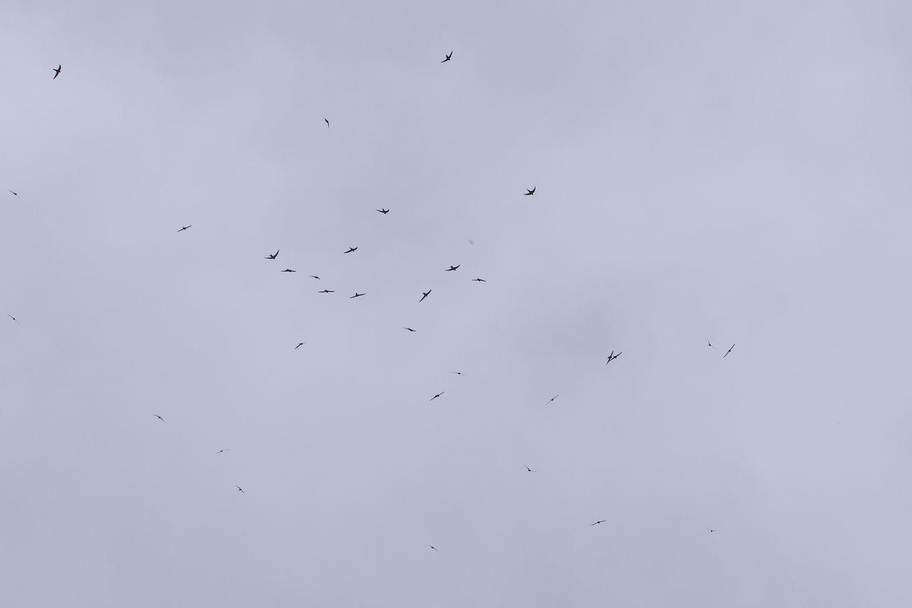 焼岳上空を飛ぶ燕の大群