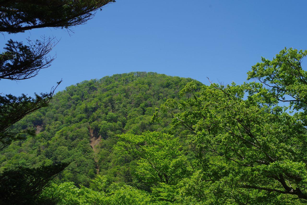 丹沢主稜縦走路から見た臼ヶ岳