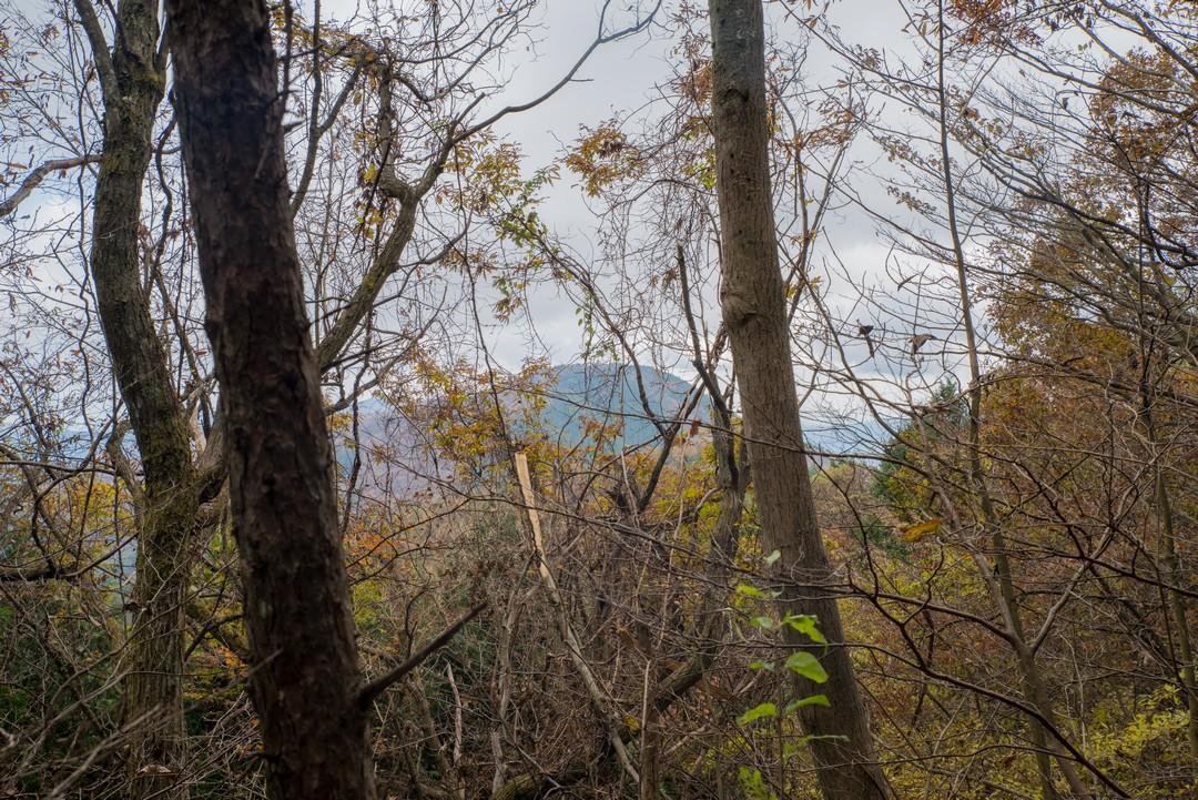 笹尾根の丸山