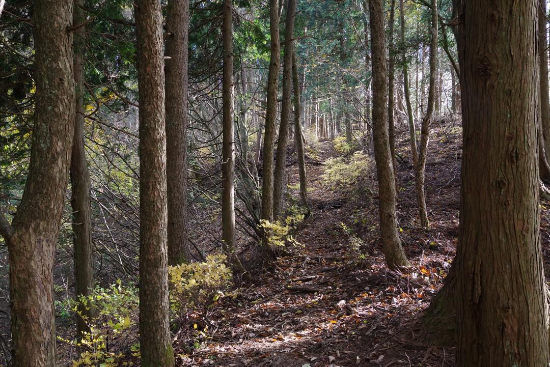 笹尾根縦走路の光景