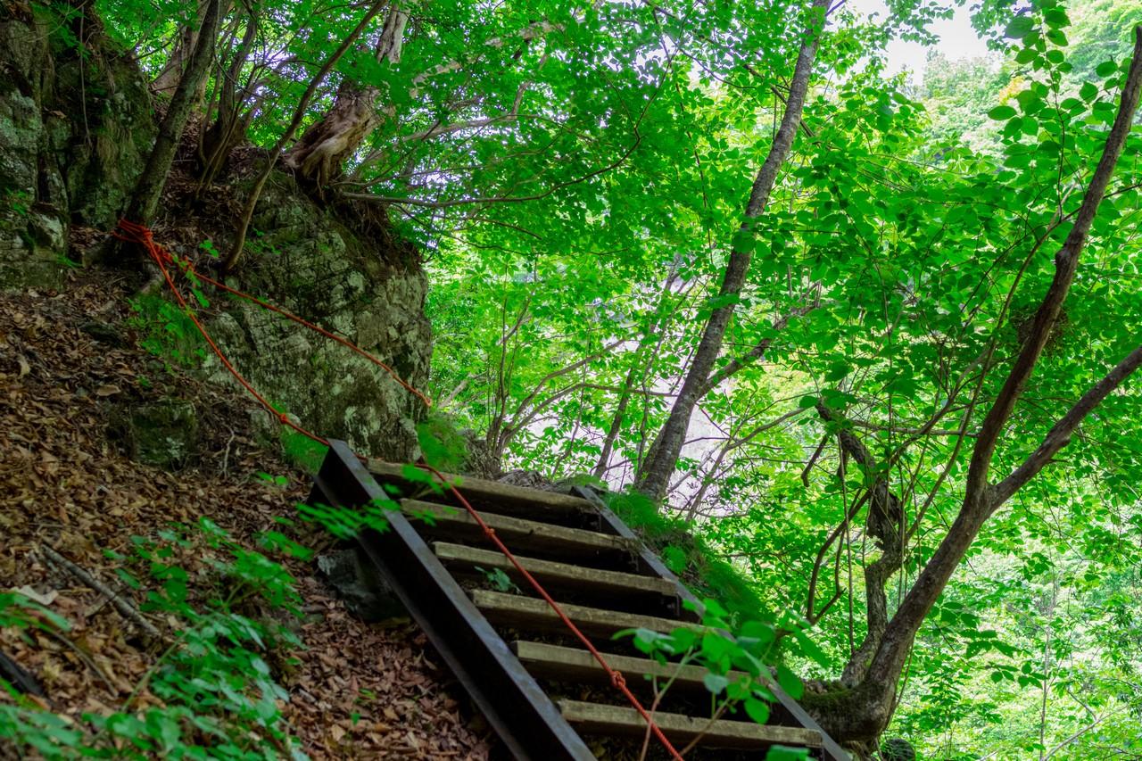 川苔山 百尋の滝から山頂へと向かう登山道