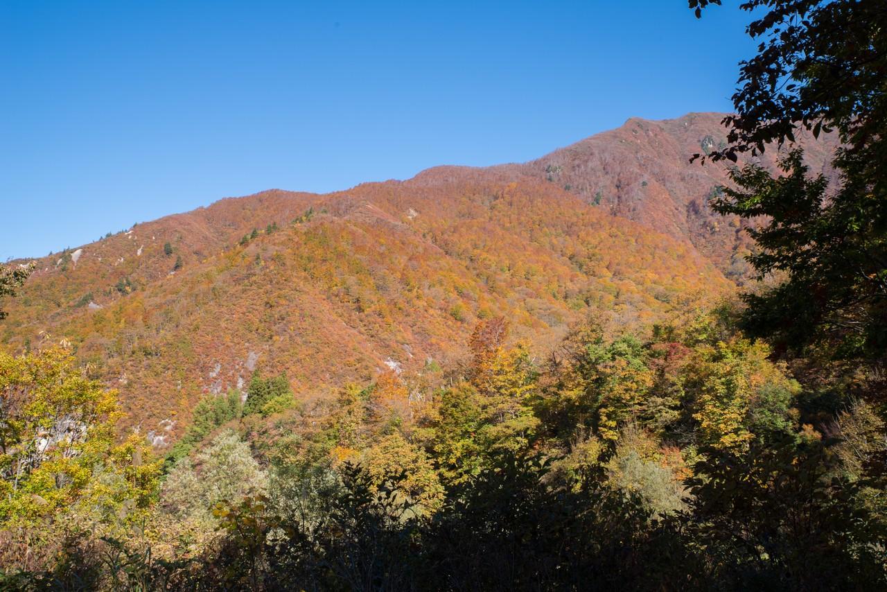 桜坂駐車場から見た黒岩峰の紅葉