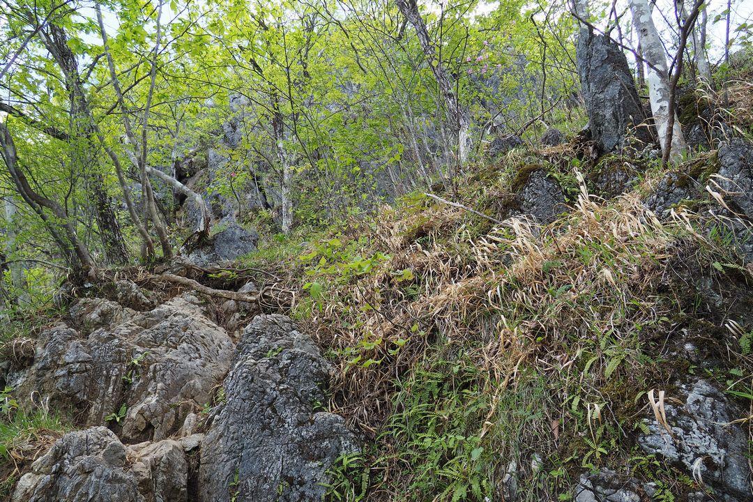 二子山 股峠から東岳へ続く登山道の様子