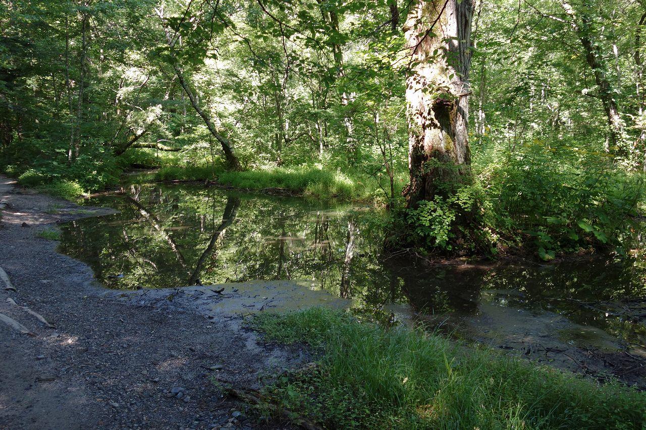 森の中の水溜り