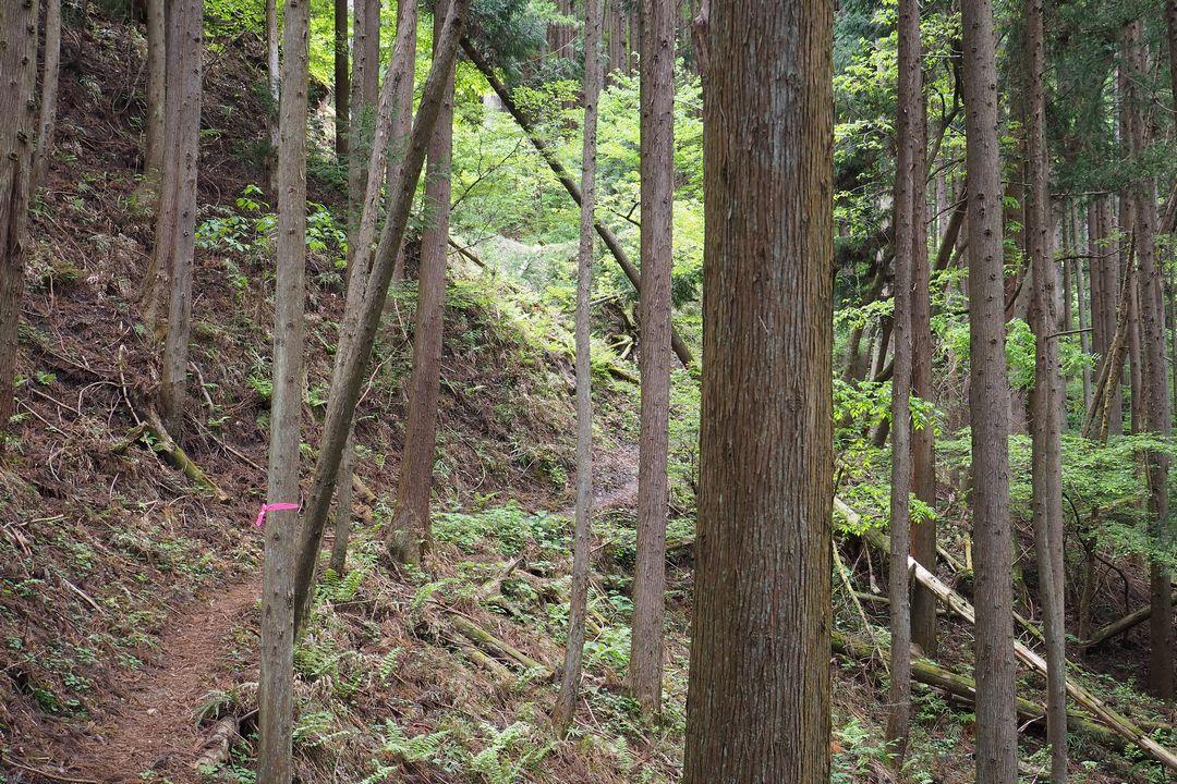 坂本からの二子山へ続く登山道の様子