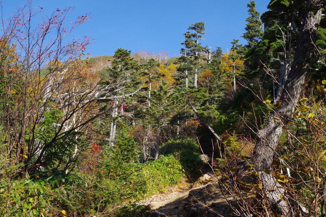 合戦尾根の登山道