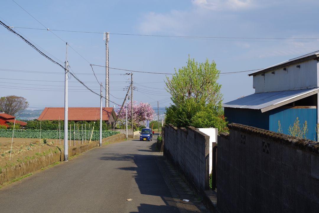 春の大倉集落