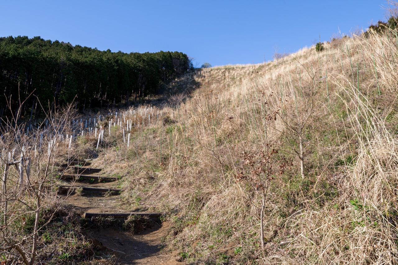 200320大野山_0046