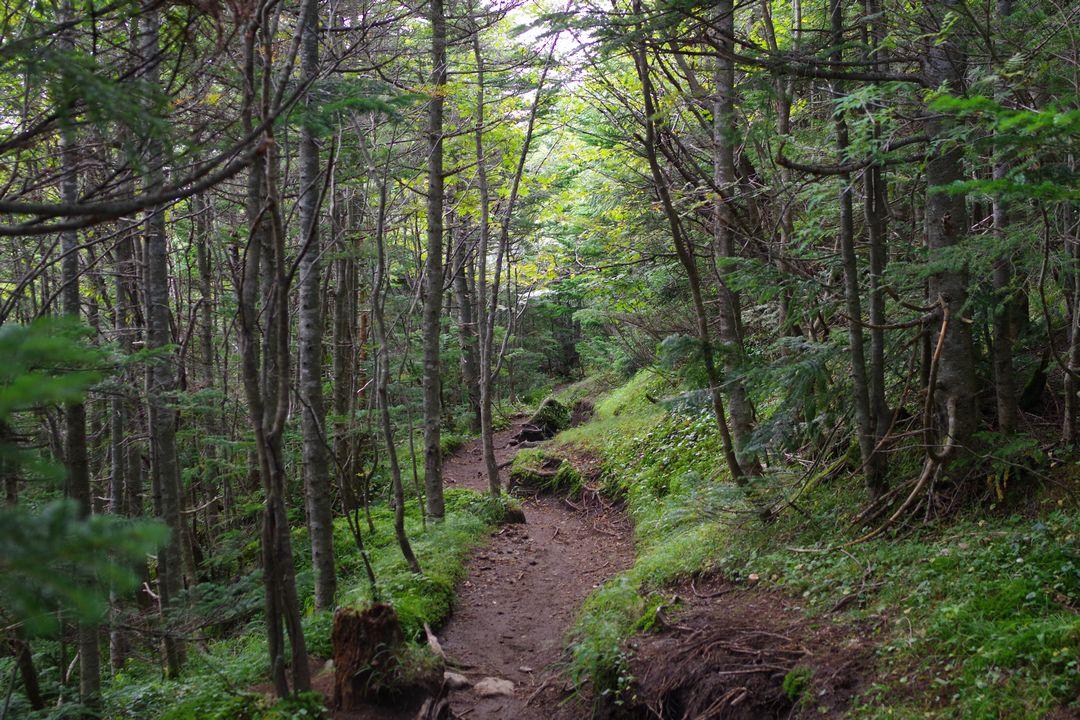 中コースの登山道