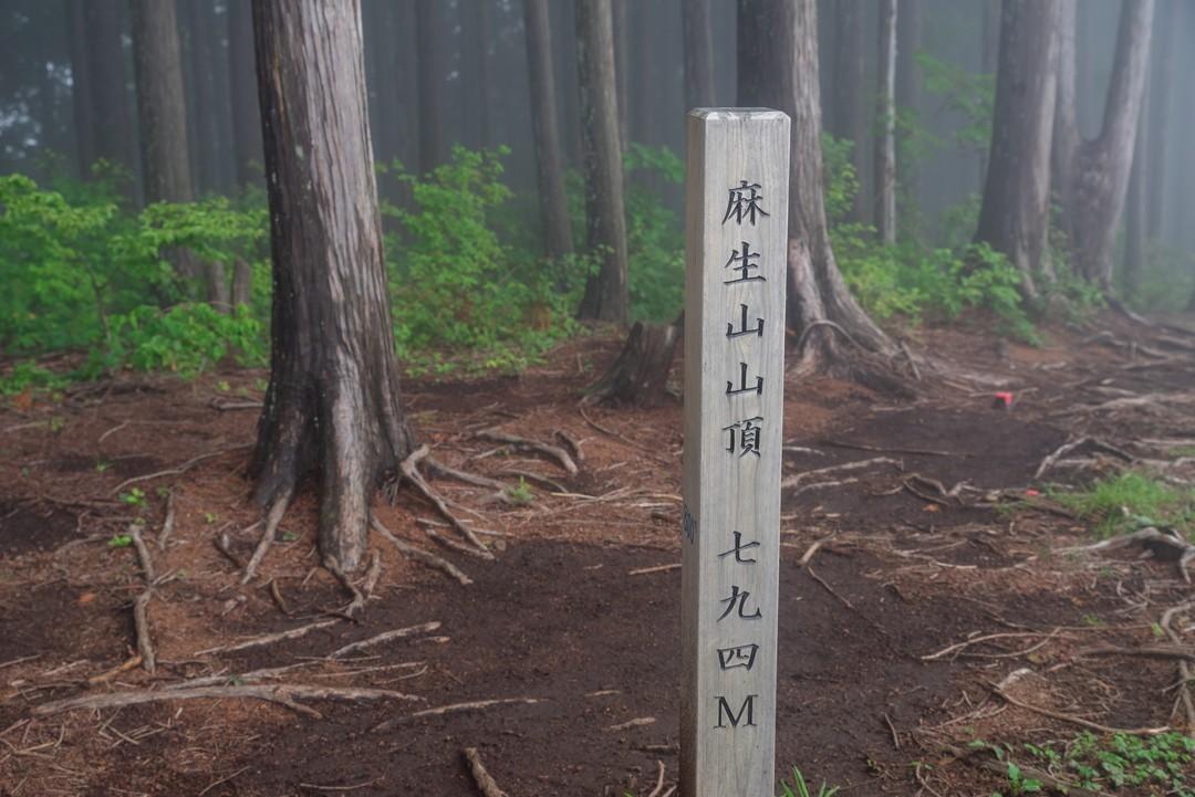 190630南沢あじさい山_077