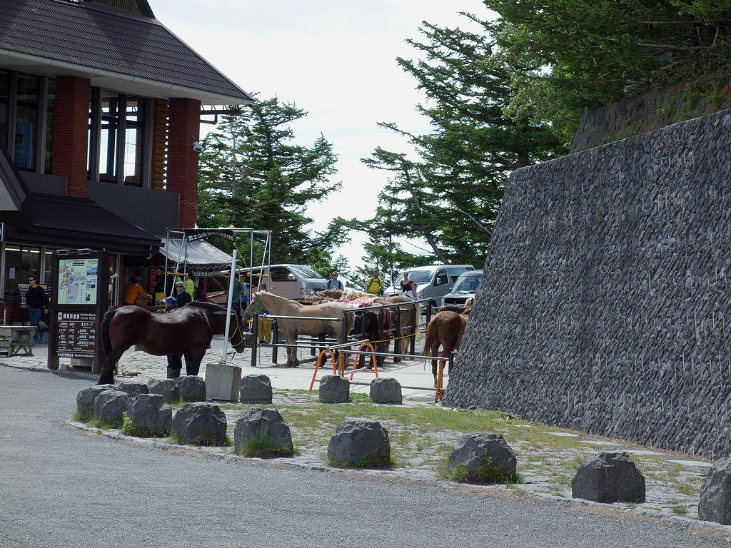 富士山五合目の馬