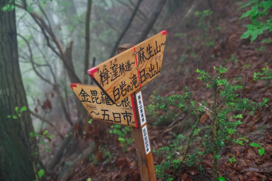 190630南沢あじさい山_074