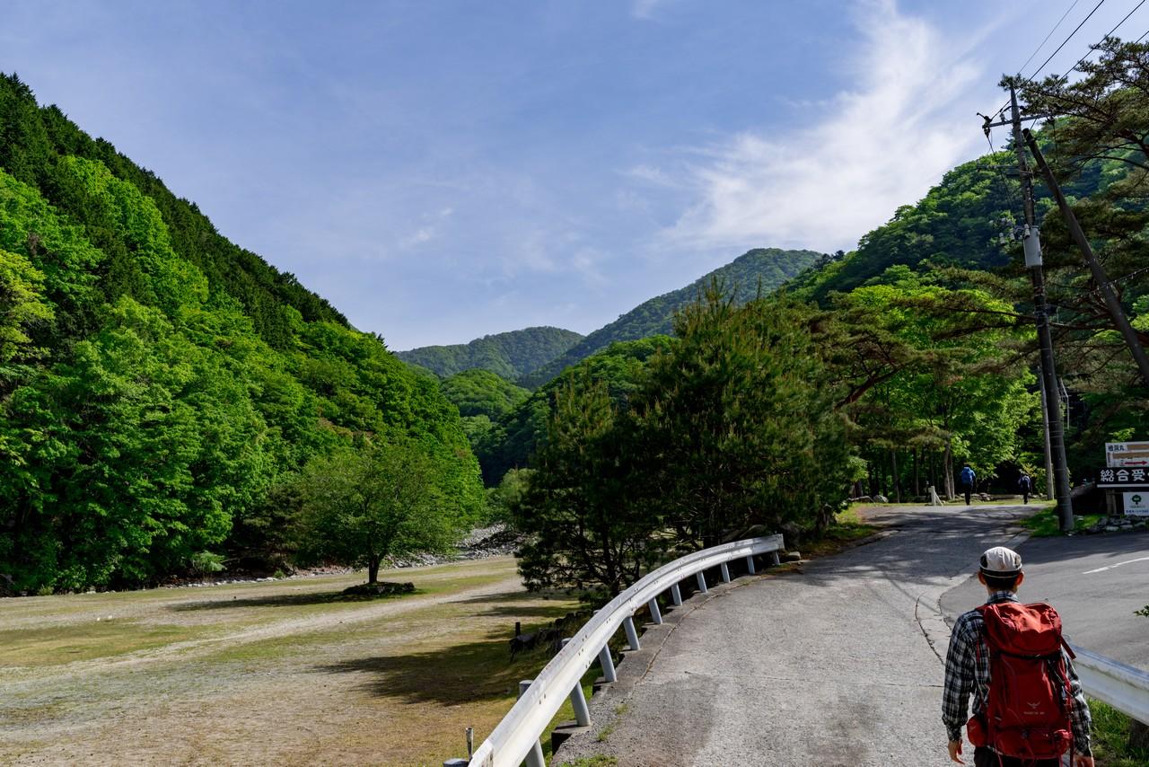 西丹沢の林道の沿道風景