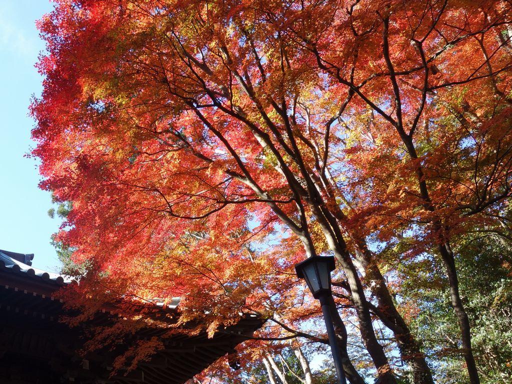 高尾山 薬王院の正門と紅葉