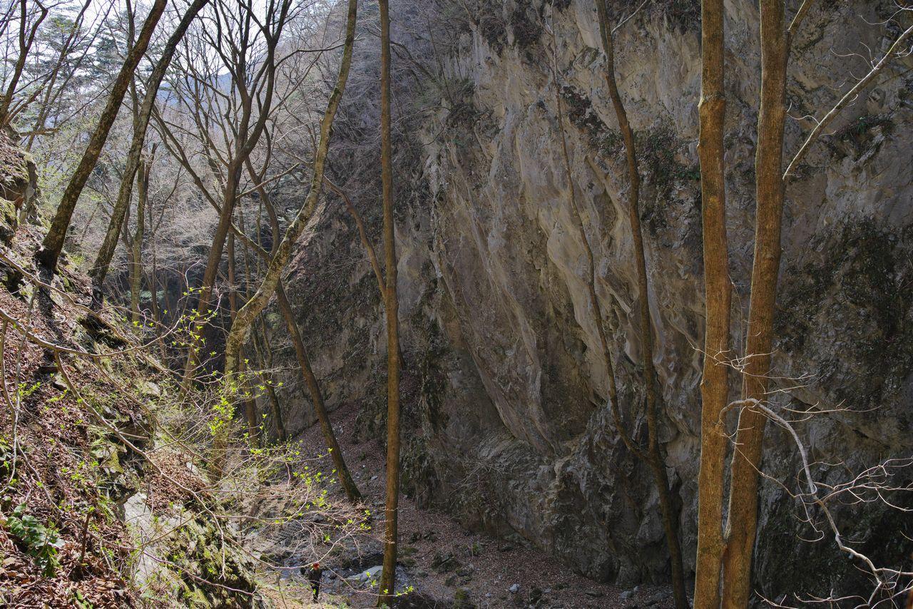 稲村岩の岸壁