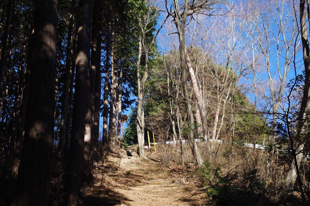 関八州見晴台へ向かう登山道から見上げた奥武蔵グリーンライン