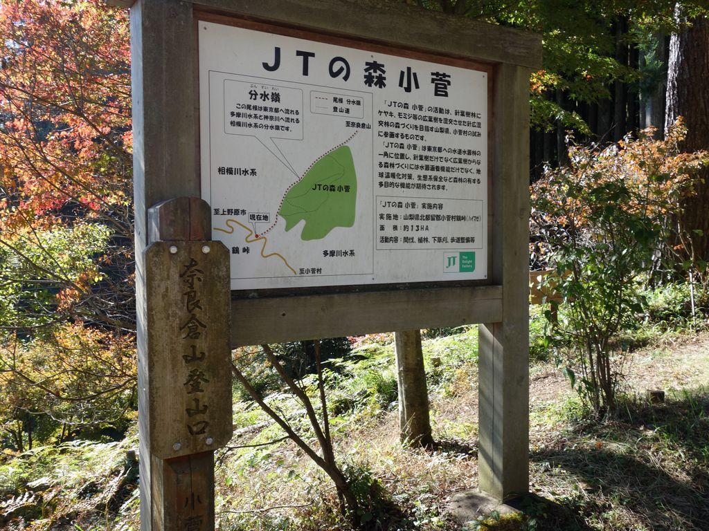 奈良倉山-大マテイ山 多摩源流域に広がる巨樹の森 | 週末は山を目指す