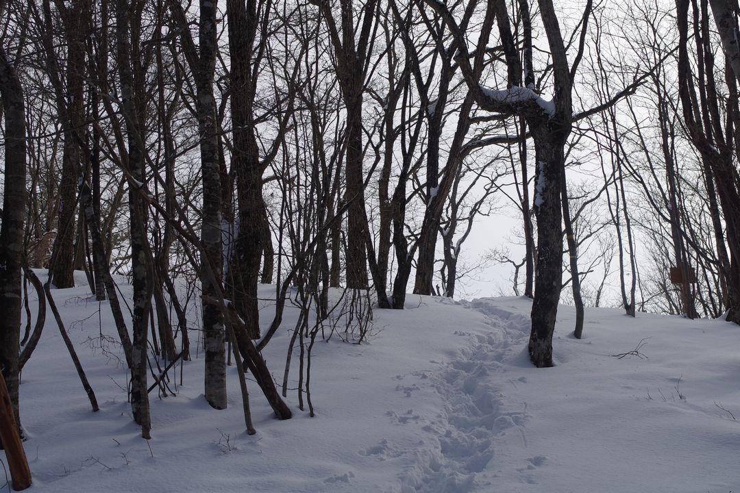 三頭山 積雪時のヌカザス尾根