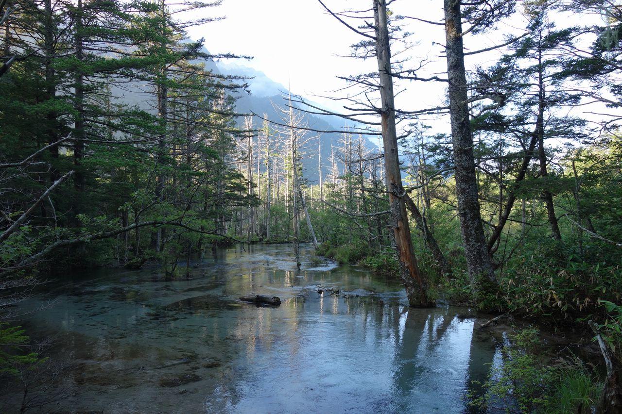 上高地 岳沢付近の水辺