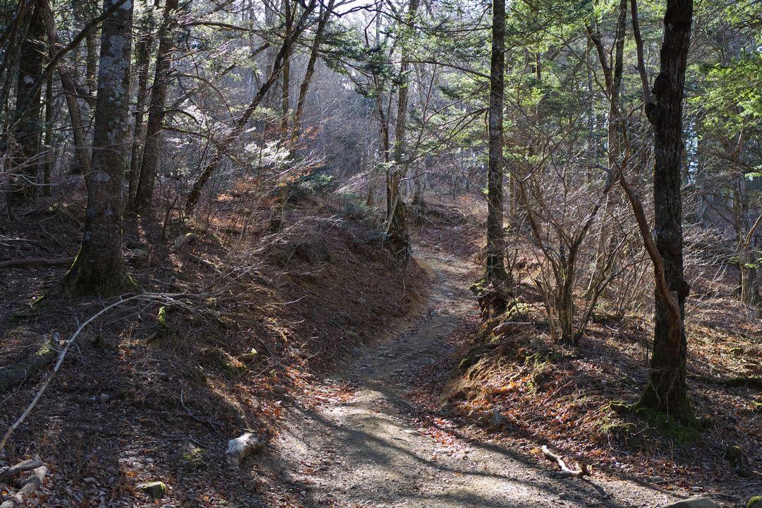 三ッ峠山 登山道の光景