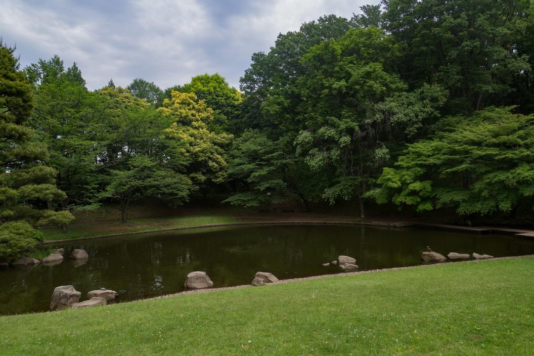 一本杉公園の人工池