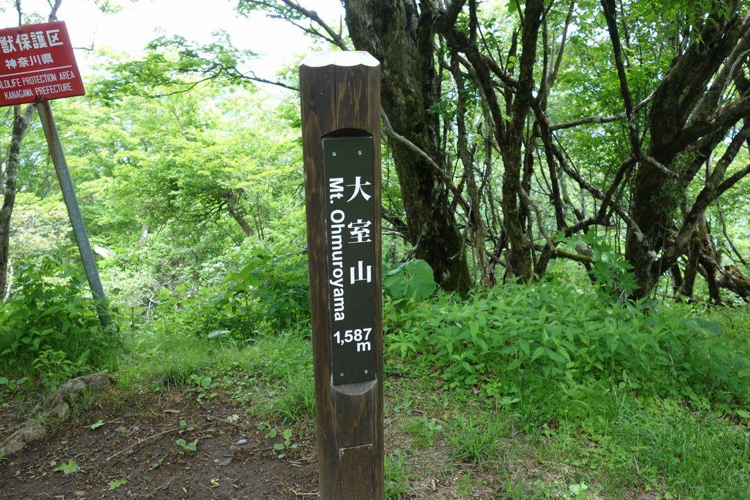 160611大室山_025