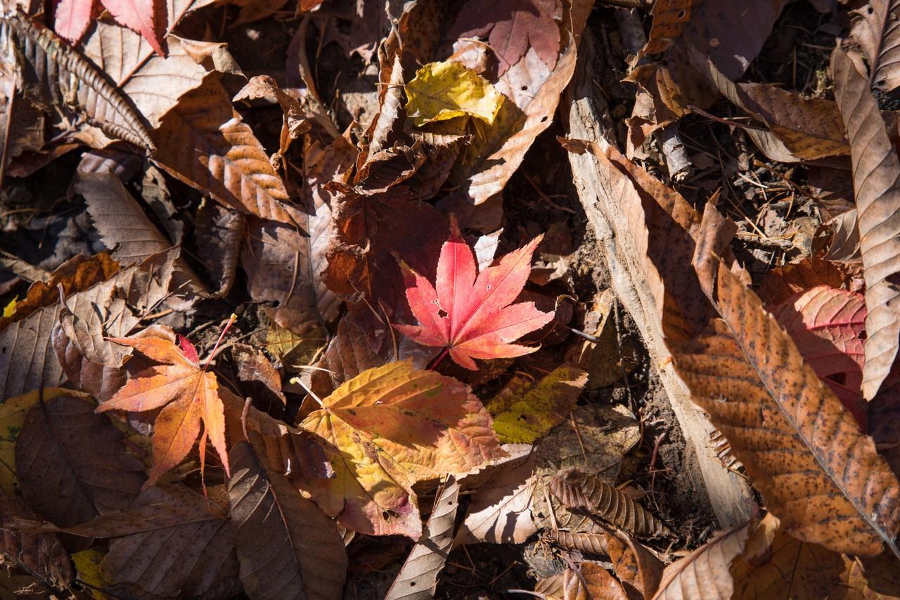 登山道上に散った紅葉
