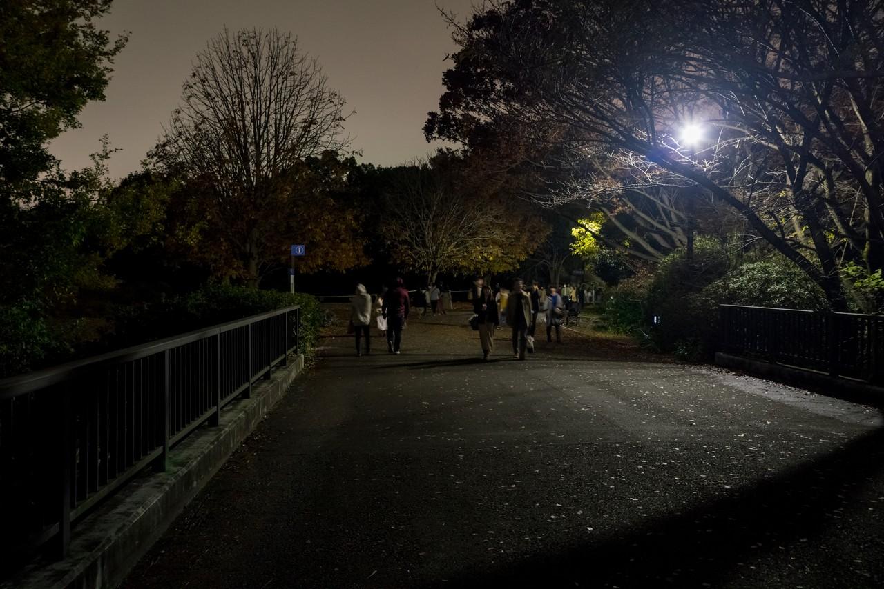 191124昭和記念公園_026