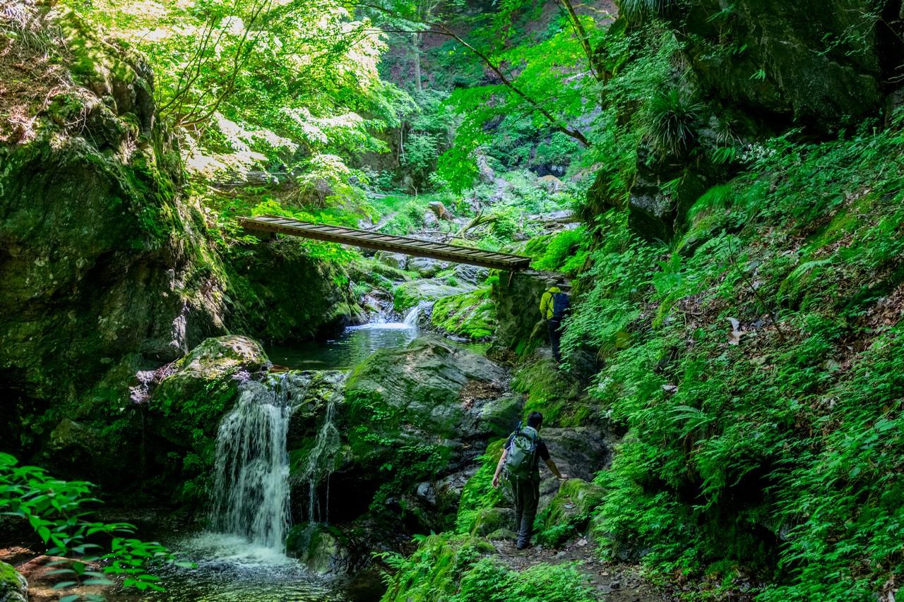 川苔山 川乗橋コースの登山道