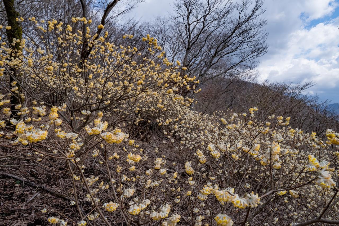 190331ミツバ岳_002
