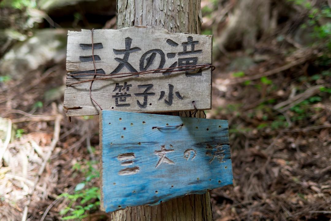 170603滝子山_018