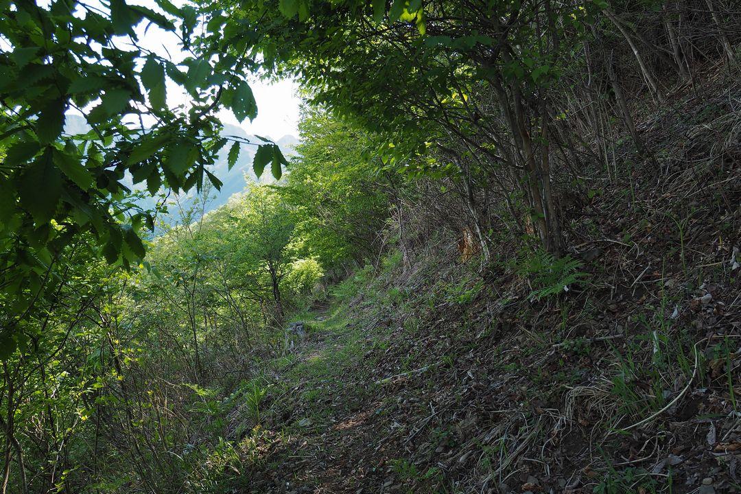 二子山 魚尾道峠からの下り