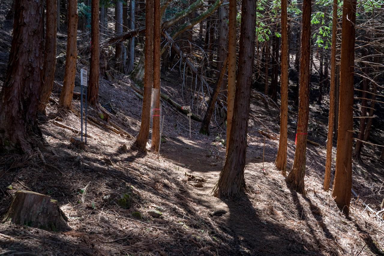 190324倉岳山_036