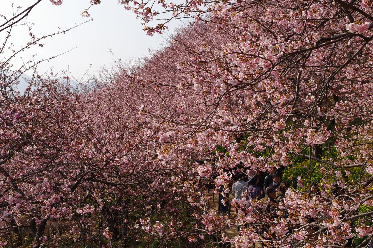 松田山ハーブ園の撮影ポイントからの風景