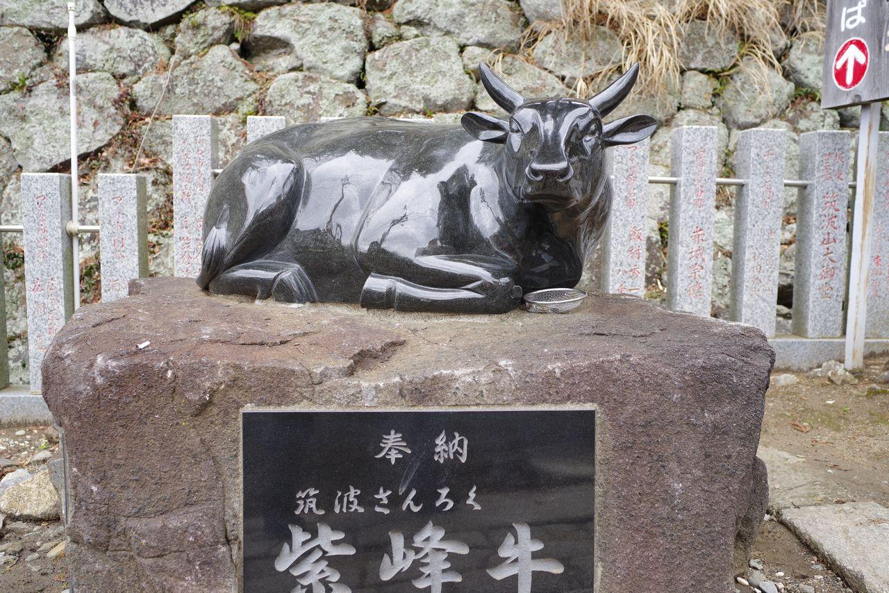 筑波山神社の牛