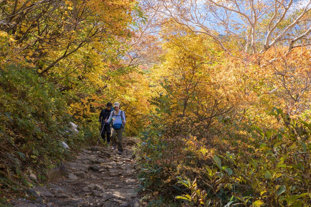 安達太良山の黄葉