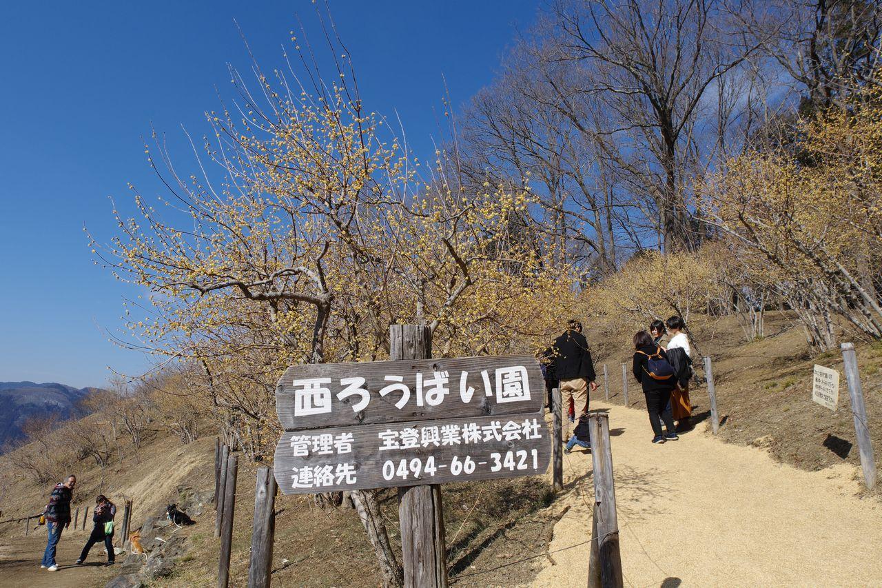 宝登山の西ロウバイ園