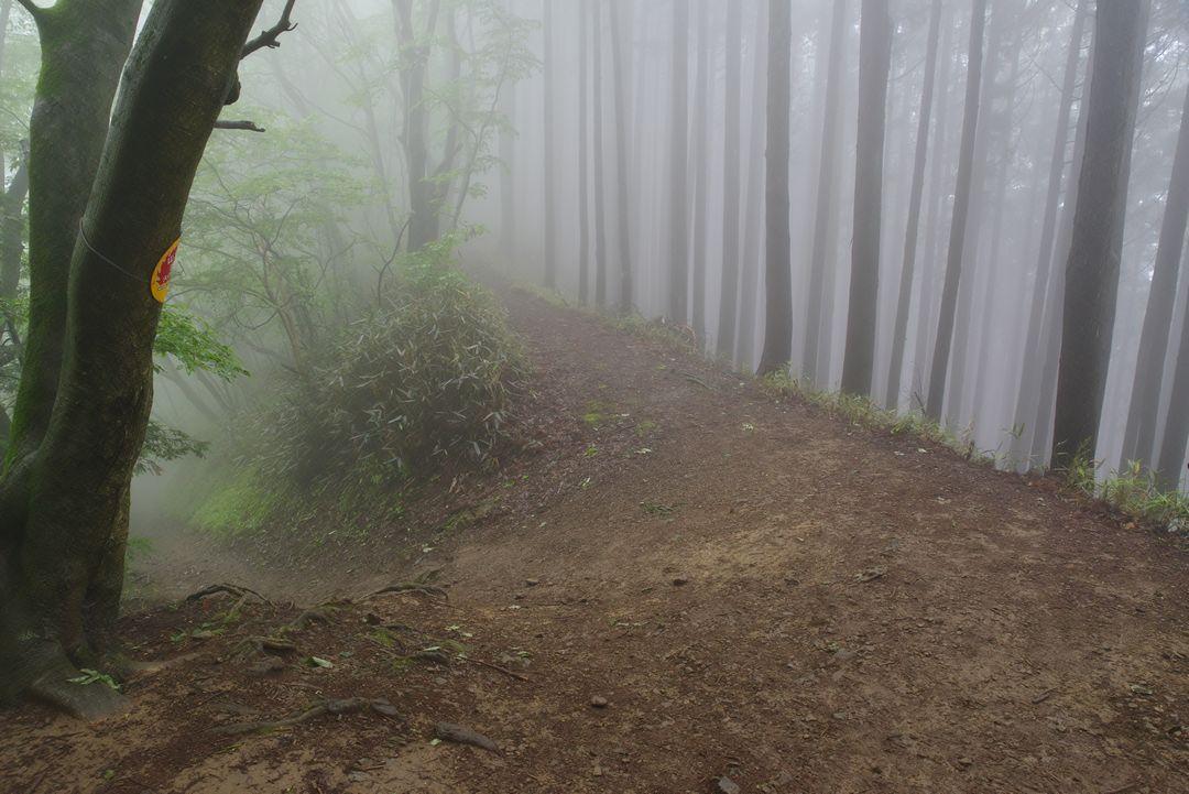 大岳山 サルギ尾根との分岐