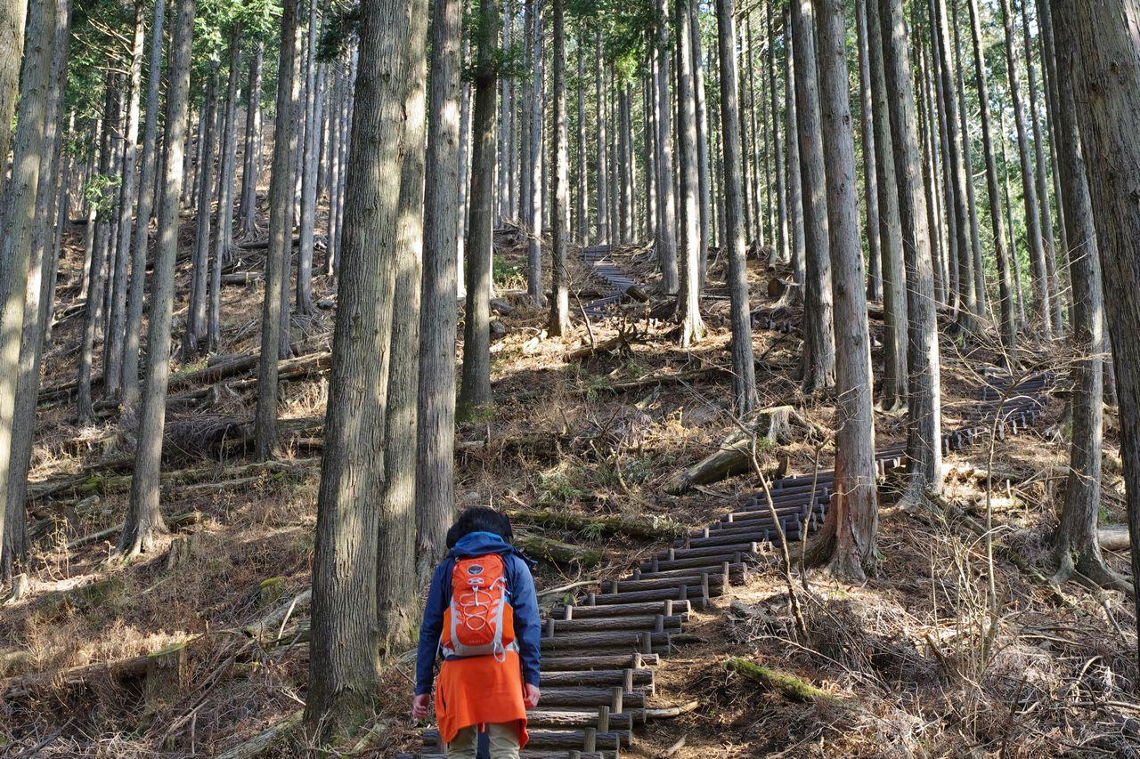 高松山 山頂直下の階段