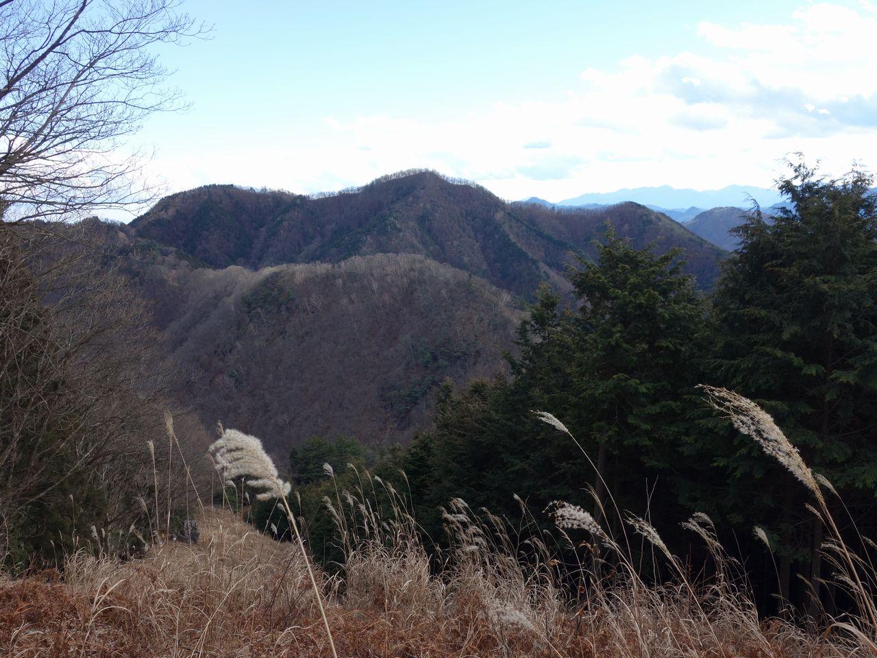 踊平付近から見た川苔山