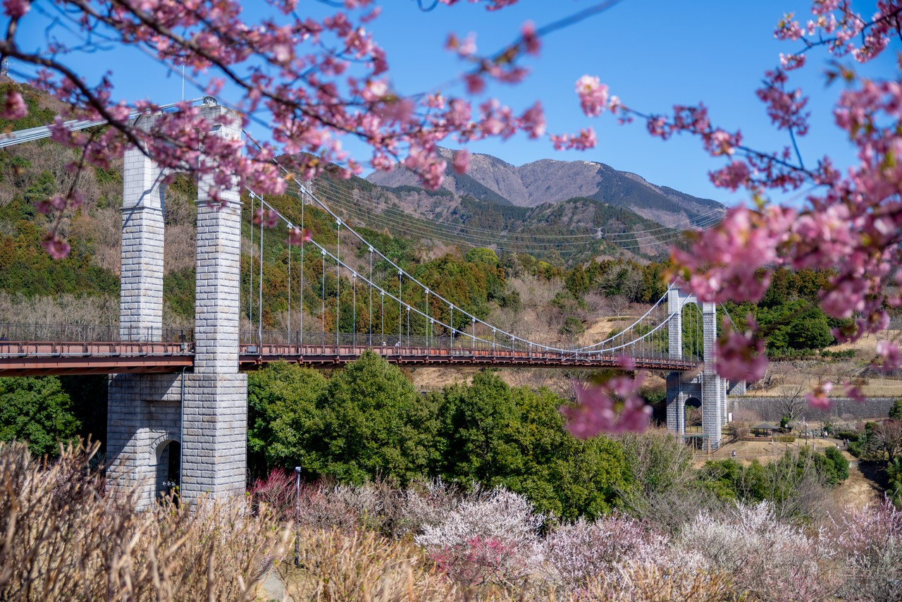 戸川公園の風の吊り橋