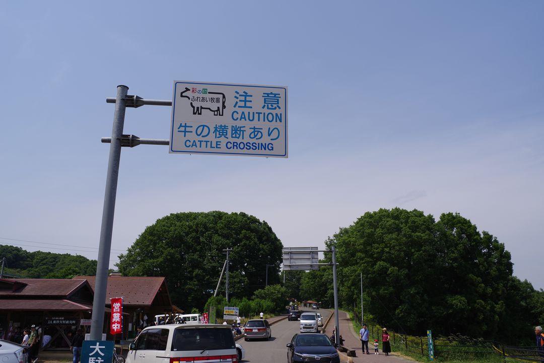 牛の横断注意と書かれた道標