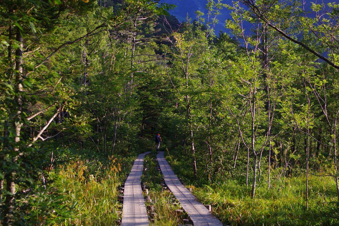 上高地の木道