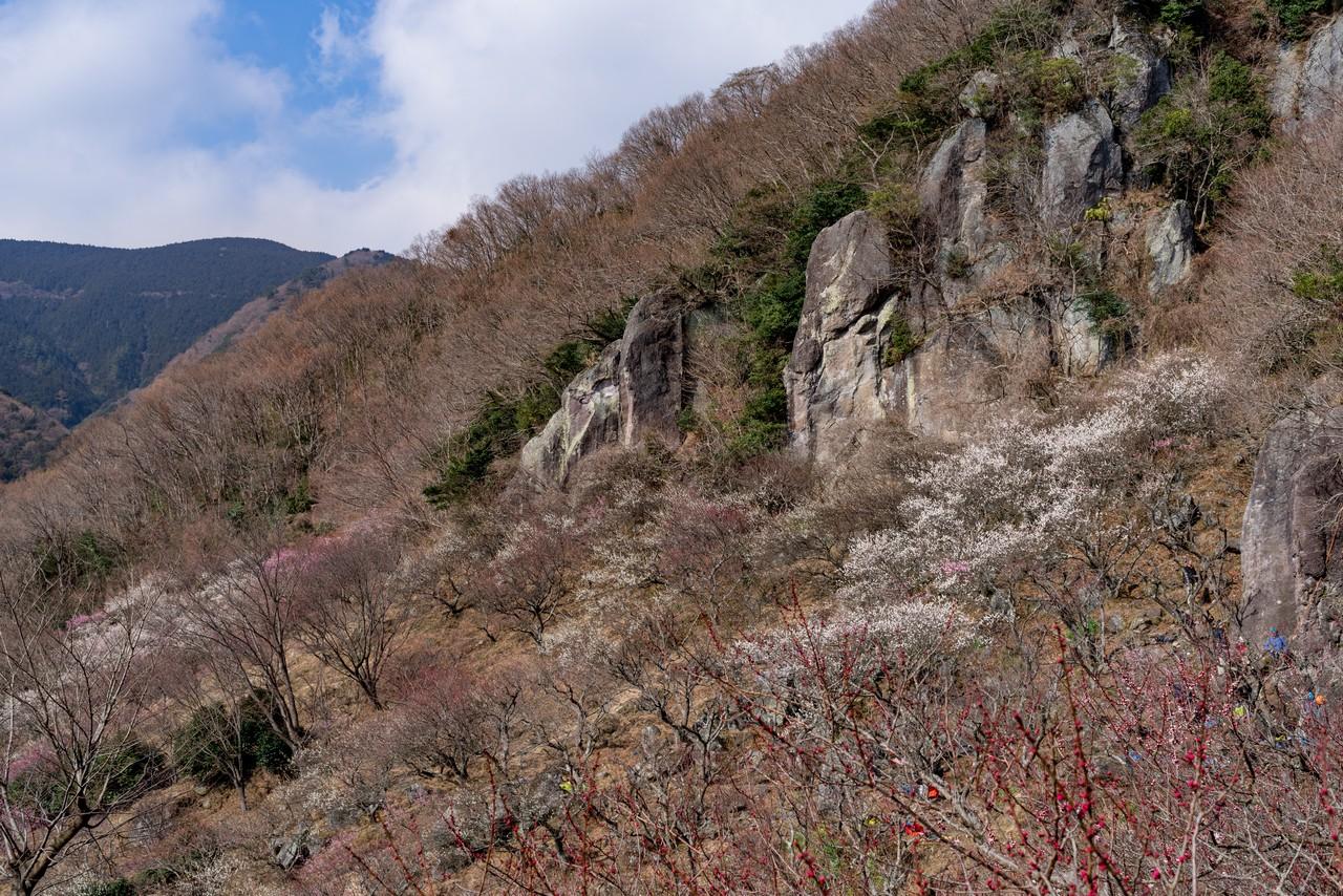190223幕山_036